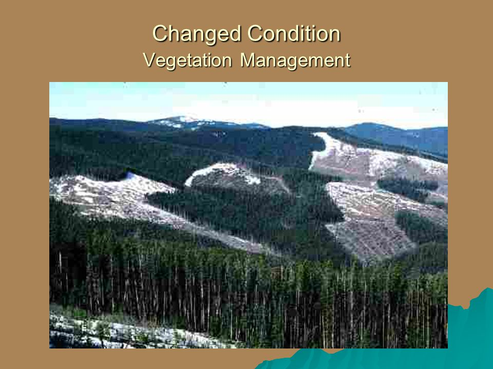 Changed Condition Vegetation Management