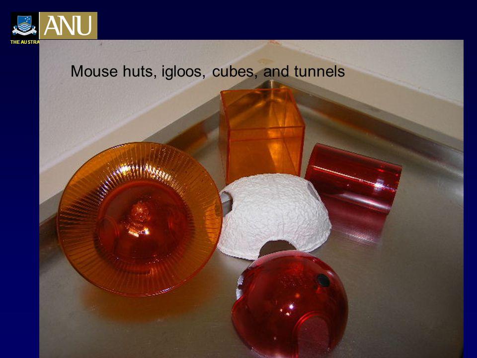 THE AUSTRALIAN NATIONAL UNIVERSITY Rodent chew products  Chew blocks Rodent gnaw bone