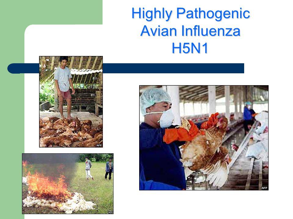 Highly Pathogenic Avian Influenza H5N1