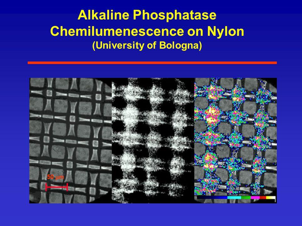 Alkaline Phosphatase Chemilumenescence on Nylon (University of Bologna)