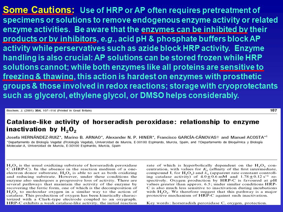 Some Cautions: Use of HRP or AP often requires pretreatment of specimens or solutions to remove endogenous enzyme activity or related enzyme activities.
