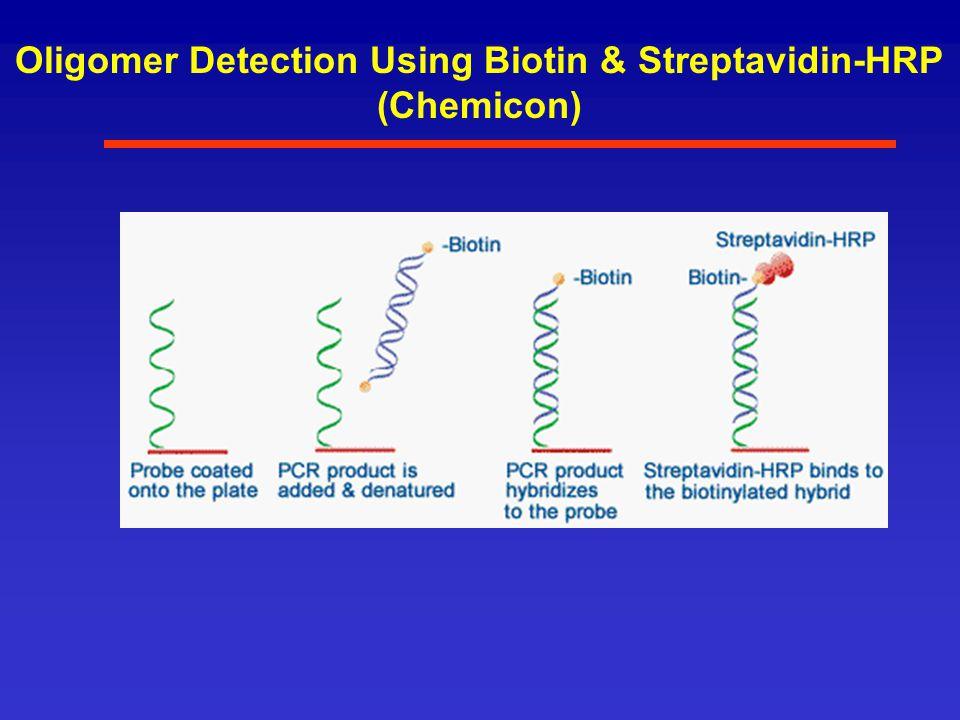 Oligomer Detection Using Biotin & Streptavidin-HRP (Chemicon)