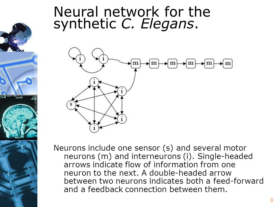 9 Neural network for the synthetic C. Elegans.