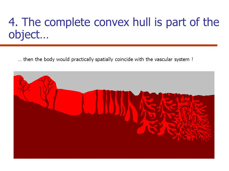 4. The complete convex hull is part of the object… … then the body would practically spatially coincide with the vascular system !