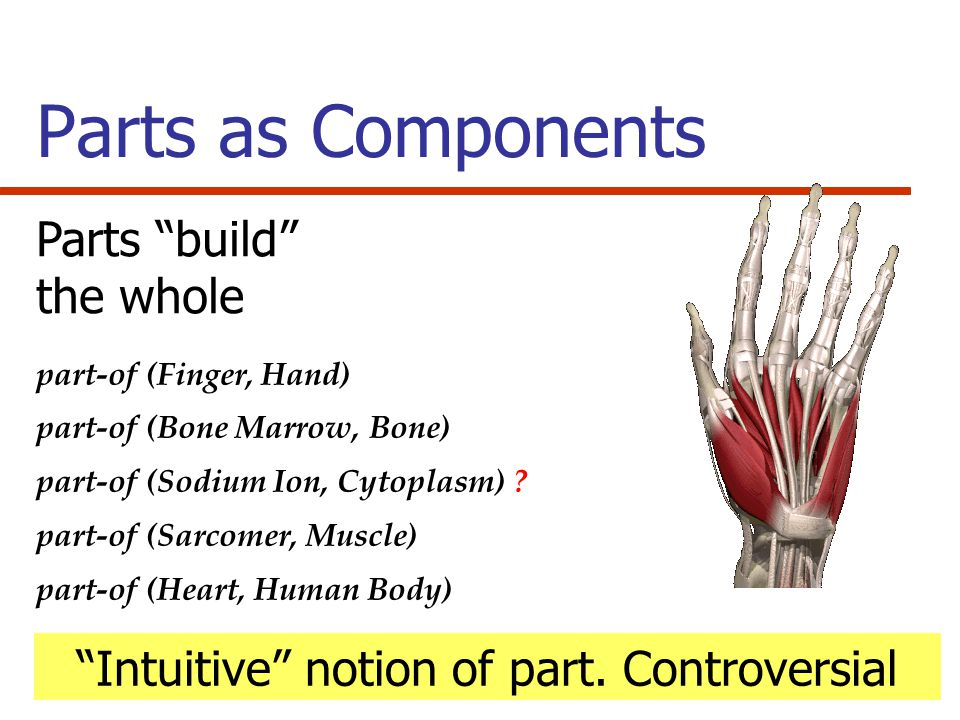 Parts as Components part-of (Finger, Hand) part-of (Bone Marrow, Bone) part-of (Sodium Ion, Cytoplasm) .