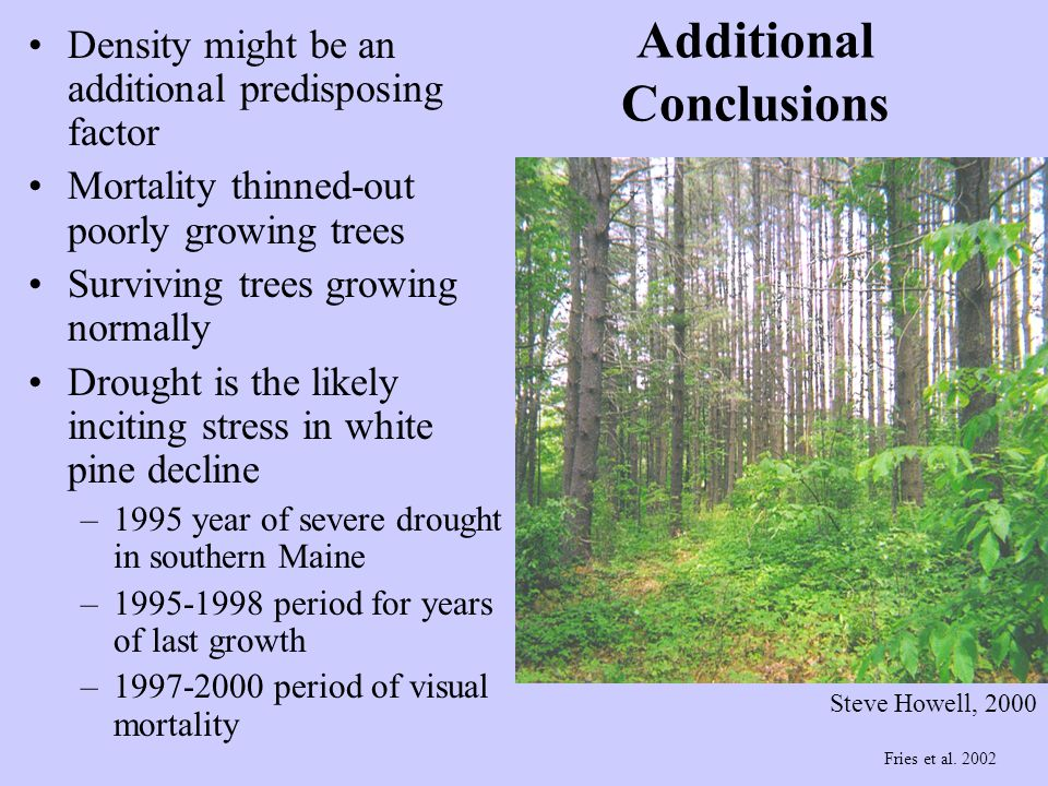 Additional Conclusions Steve Howell, 2000 Density might be an additional predisposing factor Mortality thinned-out poorly growing trees Surviving tree