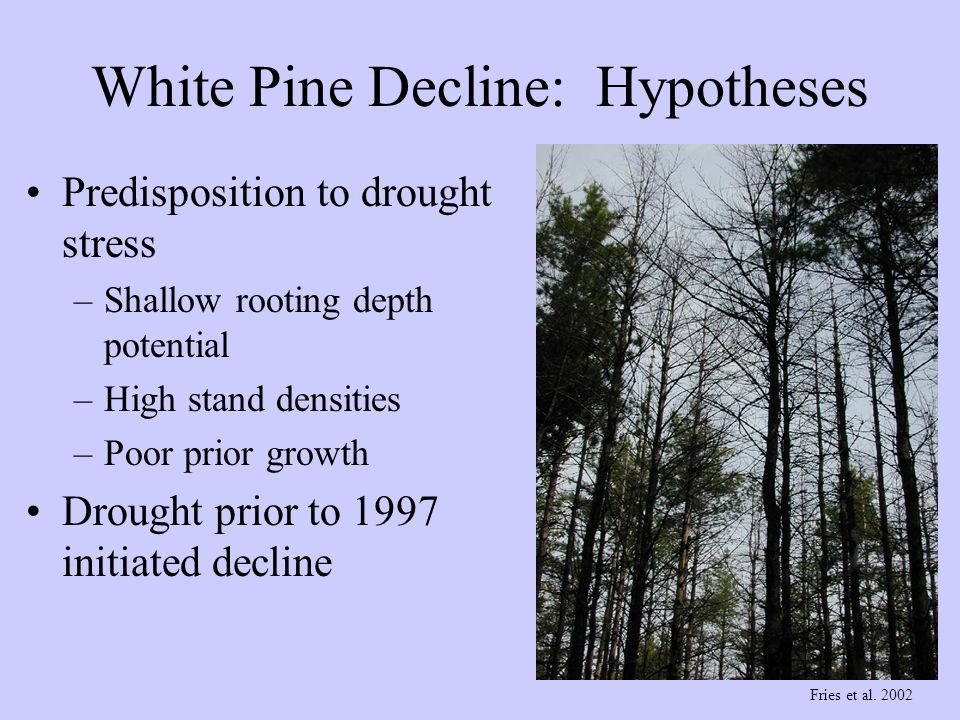 Predisposition to drought stress –Shallow rooting depth potential –High stand densities –Poor prior growth Drought prior to 1997 initiated decline Fri