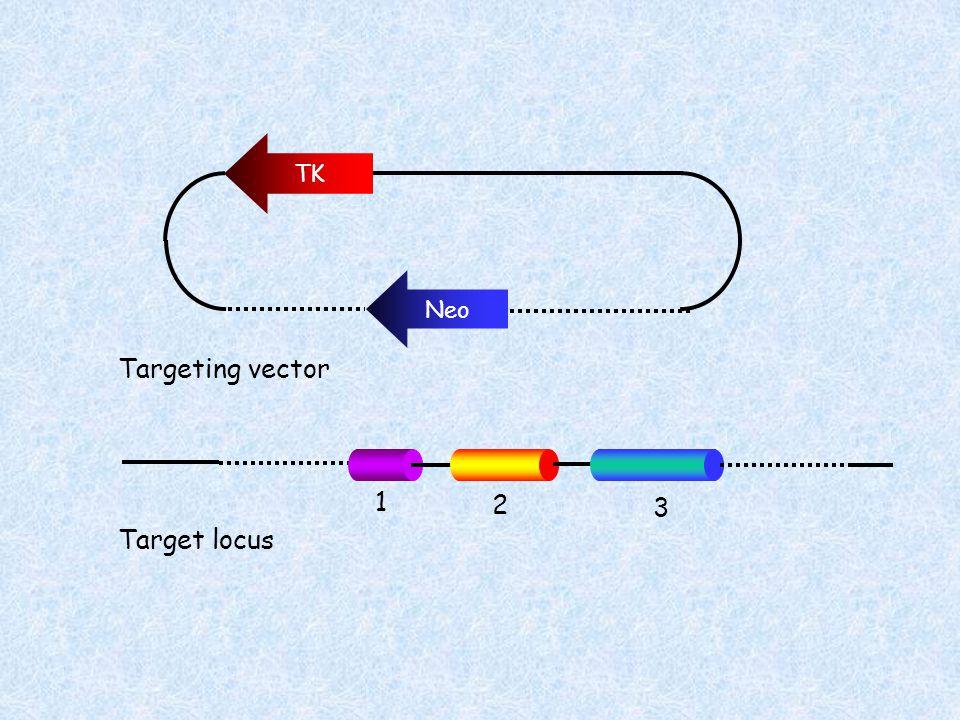 TK Neo Targeting vector Target locus 1 2 3
