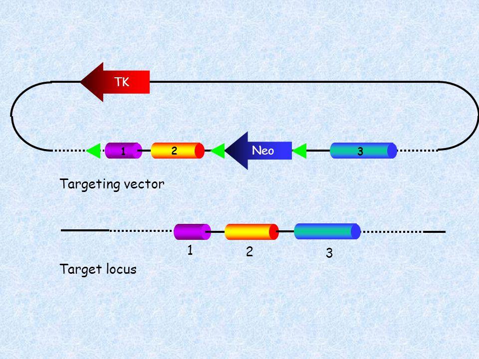 TK Neo Targeting vector Target locus 1 2 3 1 2 3