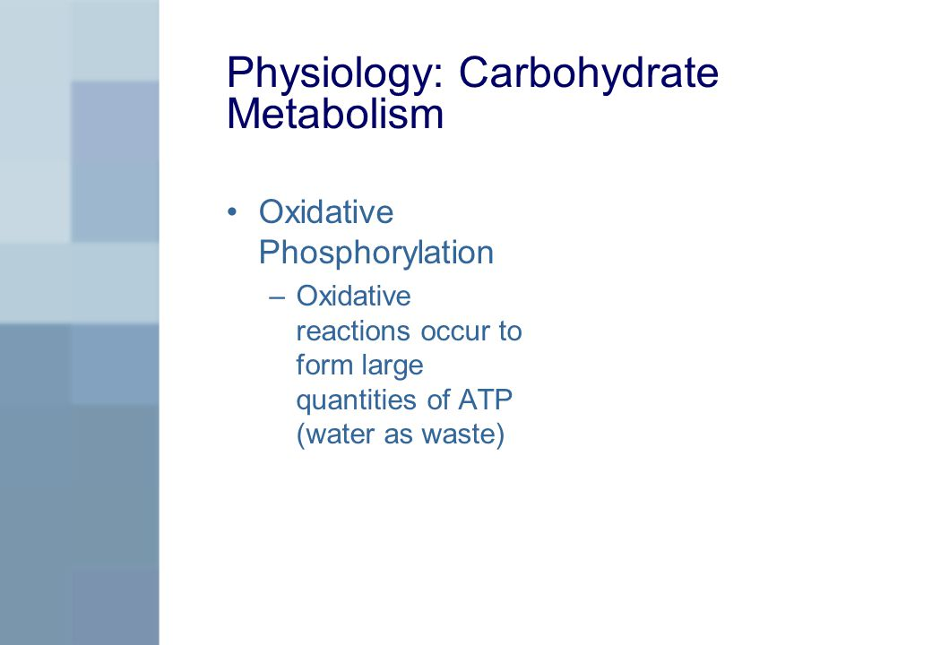 Physiology: Carbohydrate Metabolism Oxidative Phosphorylation –Oxidative reactions occur to form large quantities of ATP (water as waste)