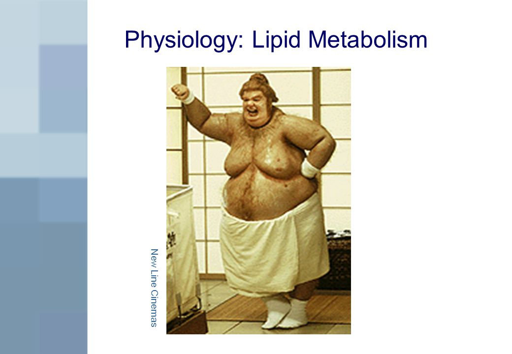 Physiology: Lipid Metabolism New Line Cinemas