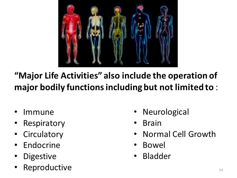 14 Major Life Activities also include the operation of major bodily functions including but not limited to : Immune Respiratory Circulatory Endocrine Digestive Reproductive Neurological Brain Normal Cell Growth Bowel Bladder