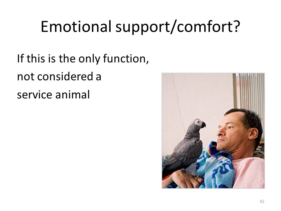 Emotional support/comfort If this is the only function, not considered a service animal 42