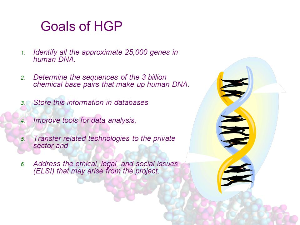 Goals of HGP 1. Identify all the approximate 25,000 genes in human DNA.
