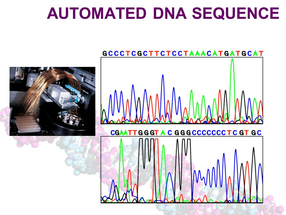 AUTOMATED DNA SEQUENCE
