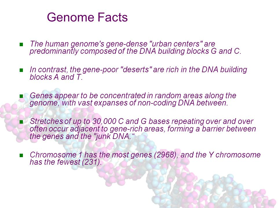 Genome Facts The human genome s gene-dense urban centers are predominantly composed of the DNA building blocks G and C.
