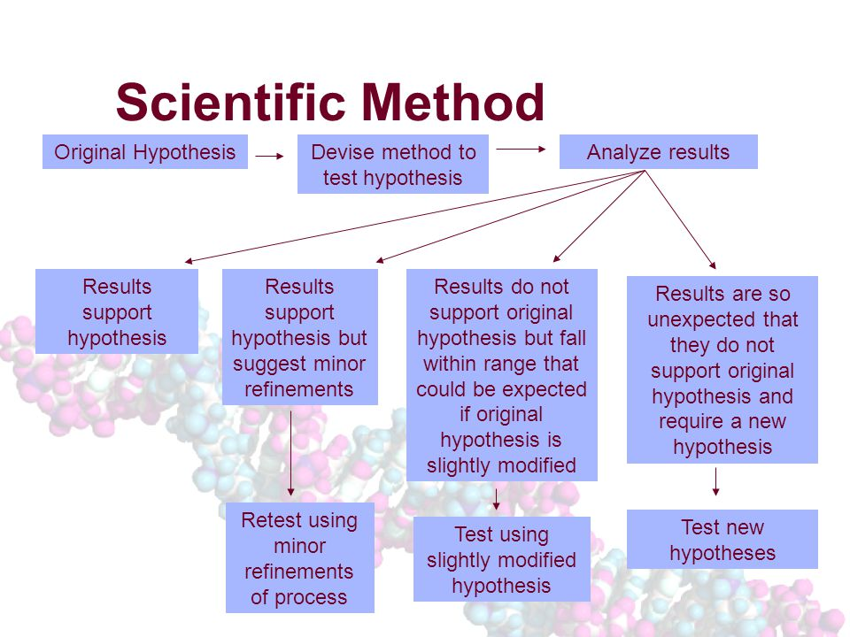 Scientific Method Original HypothesisDevise method to test hypothesis Analyze results Results support hypothesis Results support hypothesis but suggest minor refinements Results are so unexpected that they do not support original hypothesis and require a new hypothesis Results do not support original hypothesis but fall within range that could be expected if original hypothesis is slightly modified Retest using minor refinements of process Test using slightly modified hypothesis Test new hypotheses