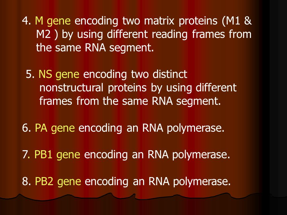 4. M gene encoding two matrix proteins (M1 & M2 ) by using different reading frames from the same RNA segment. 5. NS gene encoding two distinct nonstr