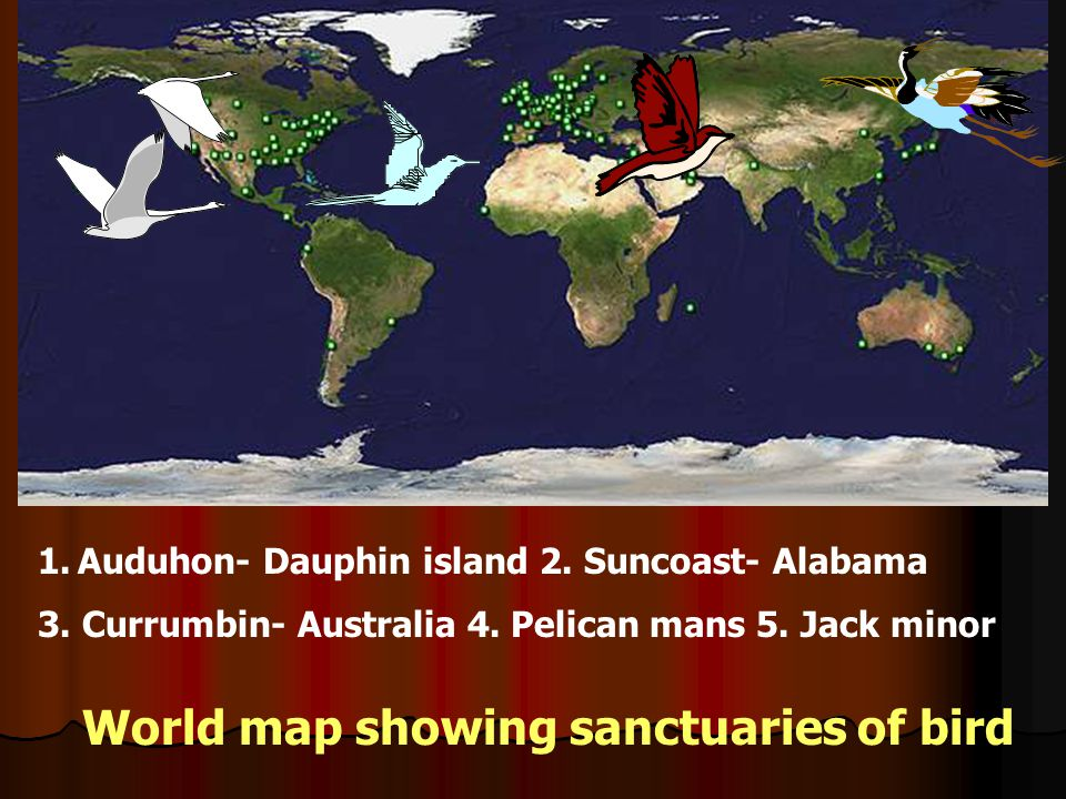 World map showing sanctuaries of bird 1.Auduhon- Dauphin island 2. Suncoast- Alabama 3. Currumbin- Australia 4. Pelican mans 5. Jack minor