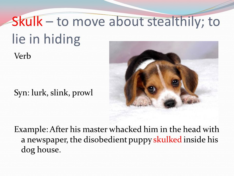 Skulk – to move about stealthily; to lie in hiding Verb Syn: lurk, slink, prowl Example: After his master whacked him in the head with a newspaper, th