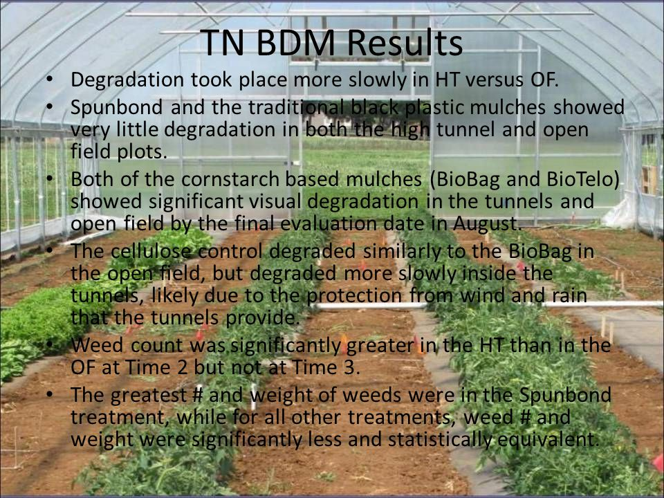TN BDM Results Degradation took place more slowly in HT versus OF. Spunbond and the traditional black plastic mulches showed very little degradation i