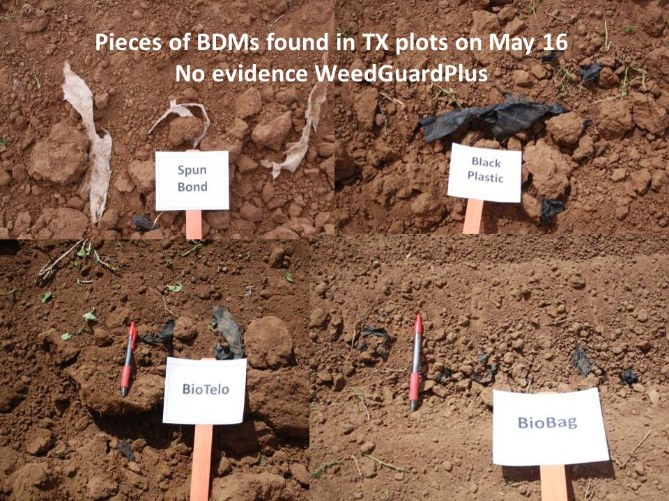 Pieces of BDMs found in TX plots on May 16 No evidence WeedGuardPlus