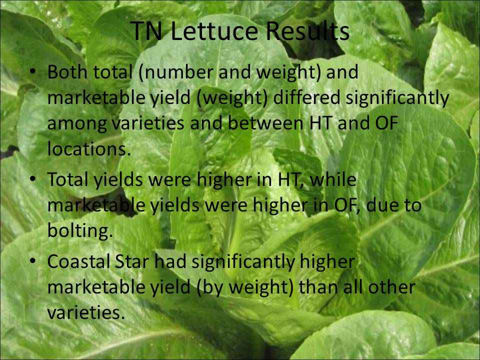 TN Lettuce Results Both total (number and weight) and marketable yield (weight) differed significantly among varieties and between HT and OF locations