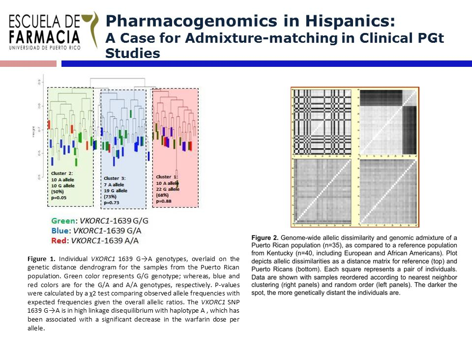 Pharmacogenomics in Hispanics: A Case for Admixture-matching in Clinical PGt Studies Figure 1.