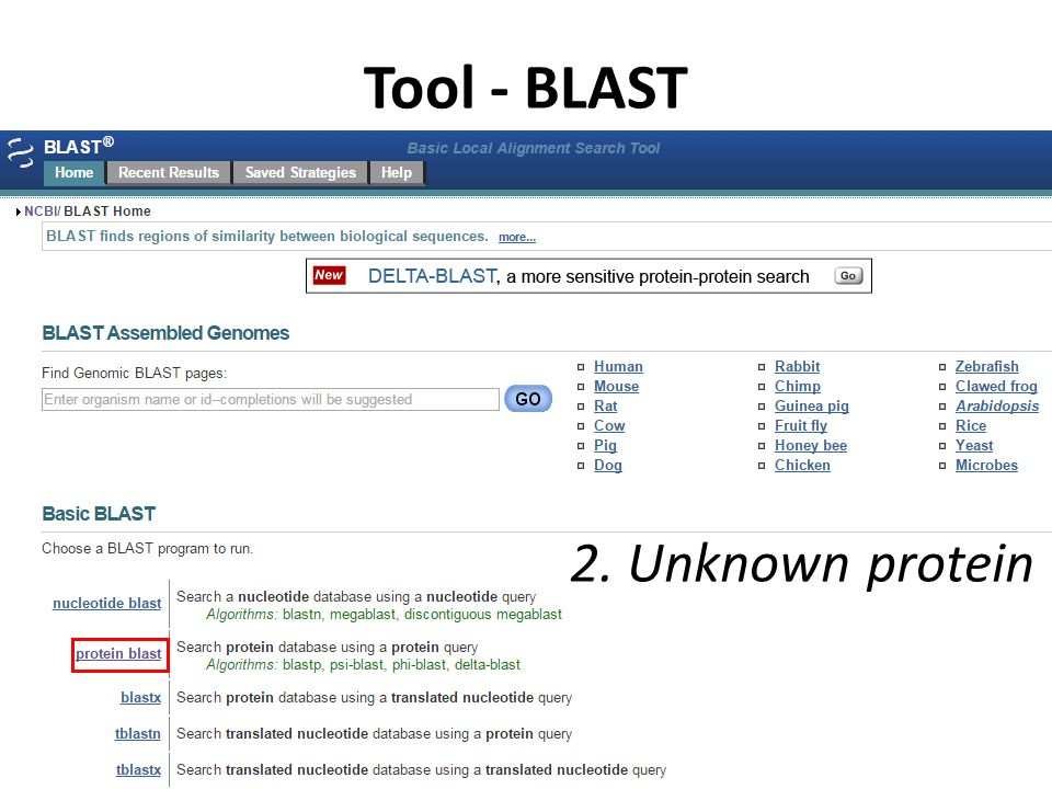 Tool - BLAST 2. Unknown protein