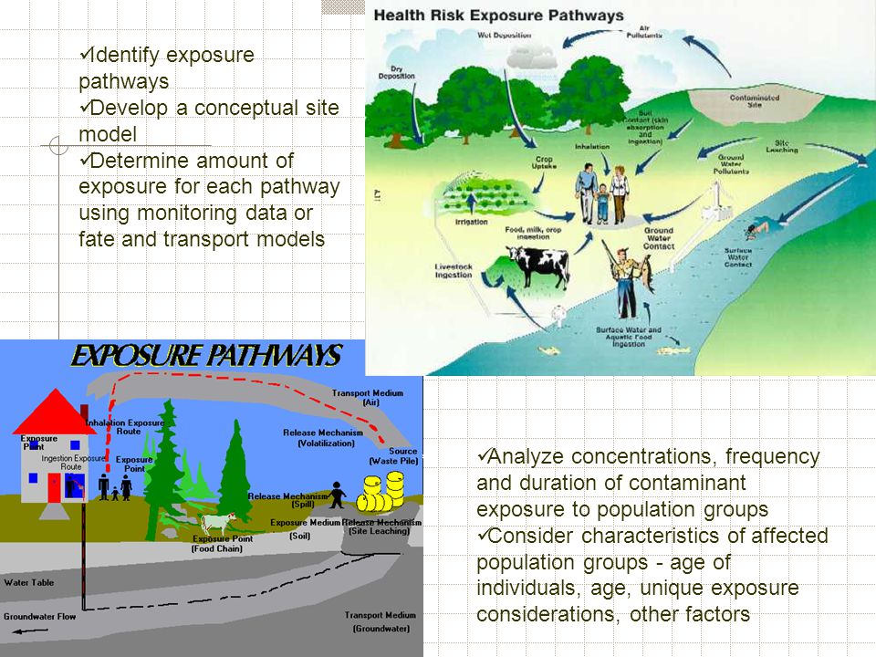 Identify exposure pathways Develop a conceptual site model Determine amount of exposure for each pathway using monitoring data or fate and transport m