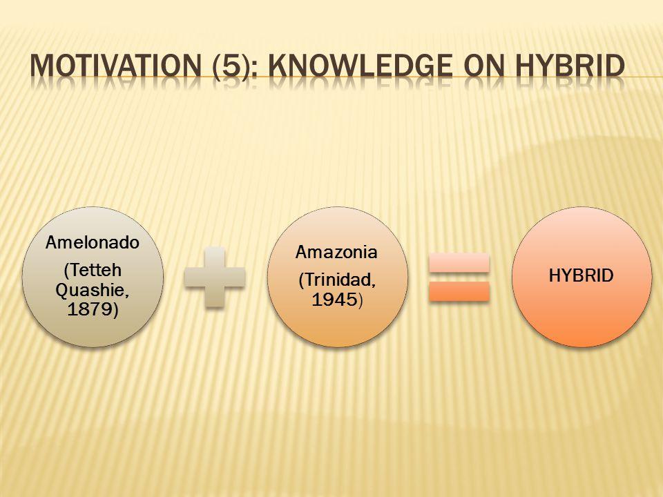 Amelonado (Tetteh Quashie, 1879) Amazonia (Trinidad, 1945) HYBRID