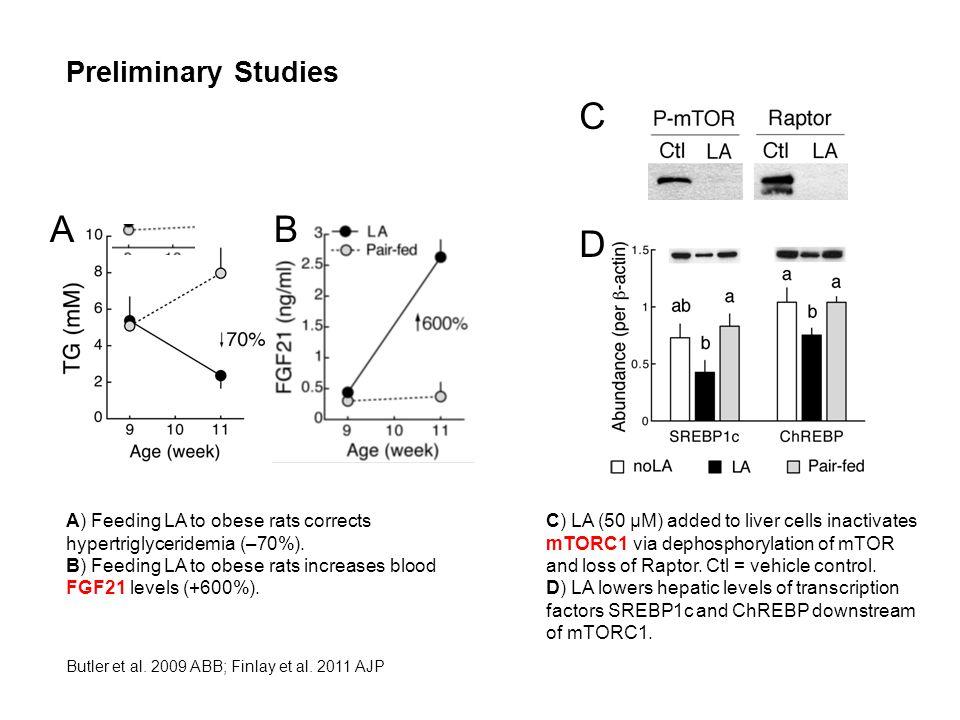 Preliminary Studies A) Feeding LA to obese rats corrects hypertriglyceridemia (–70%).