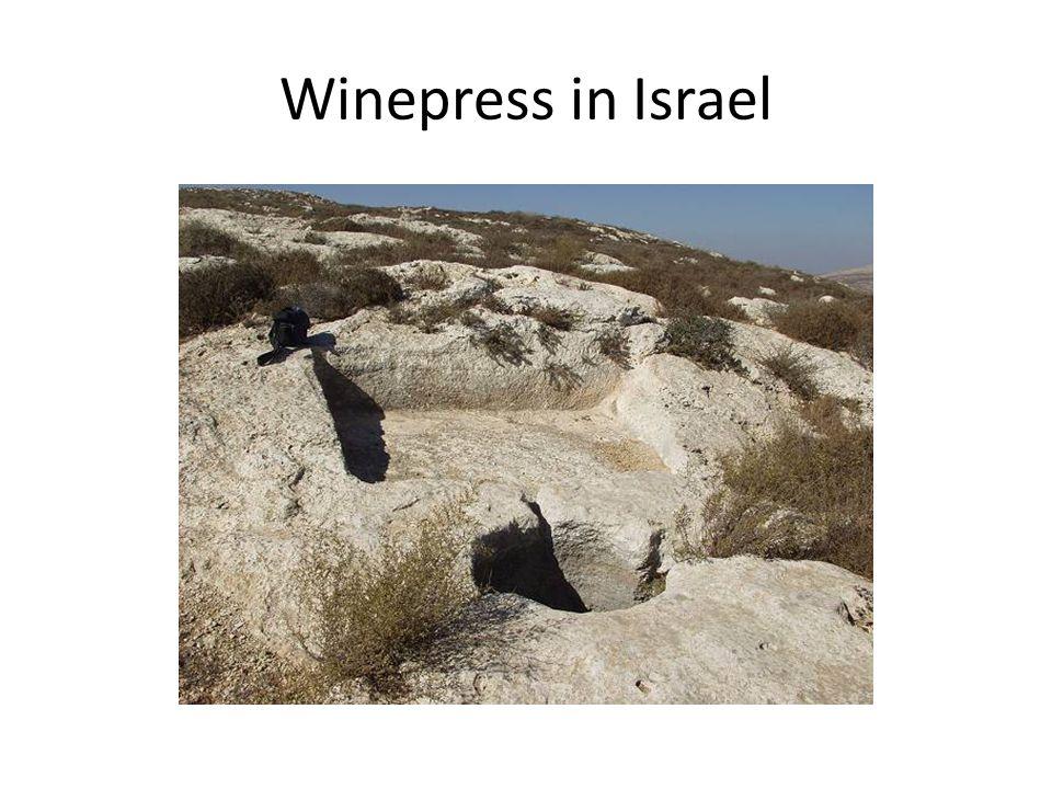 Winepress in Israel