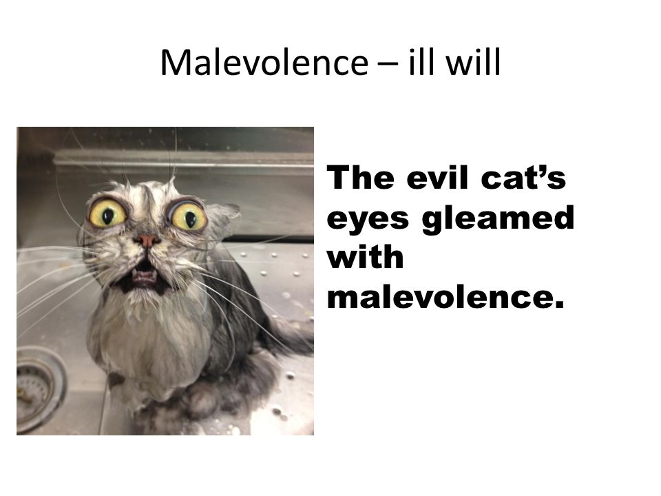 Malevolence – ill will The evil cat's eyes gleamed with malevolence.