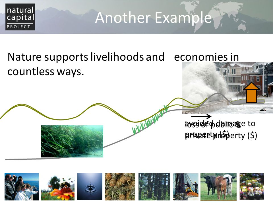 Non-market valuation Stated-preference methods: use reported choices to estimate value in a hypothetical market – Contingent valuation Ask respondents to express their willingness to pay (WTP) or willingness to accept (WTA) compensation for changes in ecosystem services – Choice modeling Ask respondents to rank/rate/choose alternative choice sets which have different combination of price attribute and ecosystem attributes