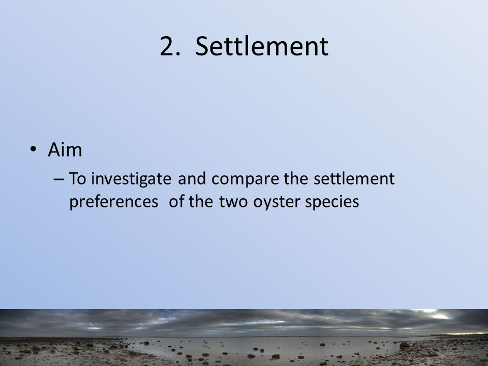 2. Settlement Aim – To investigate and compare the settlement preferences of the two oyster species