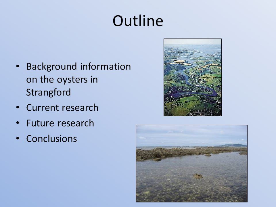 Outline Background information on the oysters in Strangford Current research Future research Conclusions