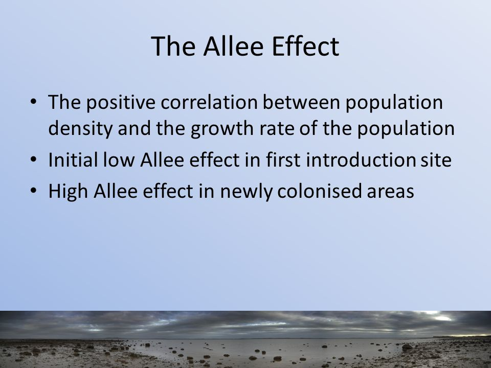 The Allee Effect The positive correlation between population density and the growth rate of the population Initial low Allee effect in first introduction site High Allee effect in newly colonised areas