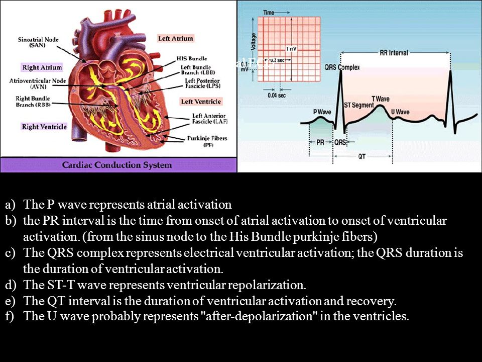 a)The P wave represents atrial activation b)the PR interval is the time from onset of atrial activation to onset of ventricular activation. (from the