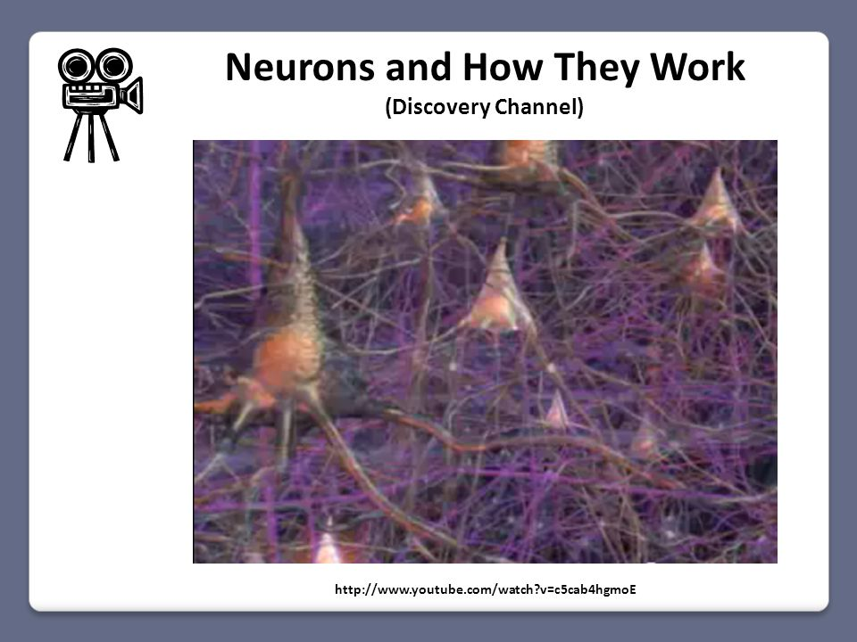 http://www.youtube.com/watch?v=c5cab4hgmoE Neurons and How They Work (Discovery Channel)