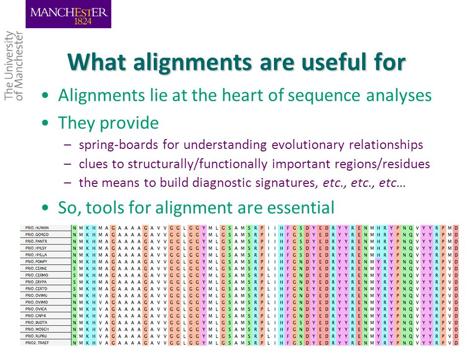 What alignments are useful for Alignments lie at the heart of sequence analyses They provide –spring-boards for understanding evolutionary relationships –clues to structurally/functionally important regions/residues –the means to build diagnostic signatures, etc., etc., etc… So, tools for alignment are essential 5/3/20154
