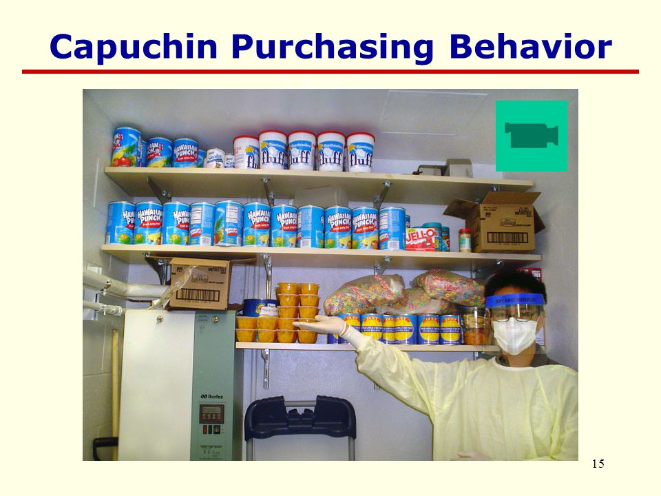 15 Movie Capuchin Purchasing Behavior