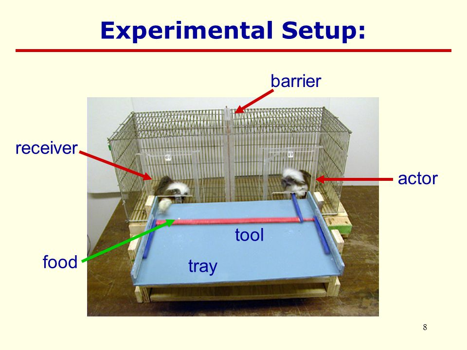 8 barrier actor receiver tray tool food Experimental Setup: