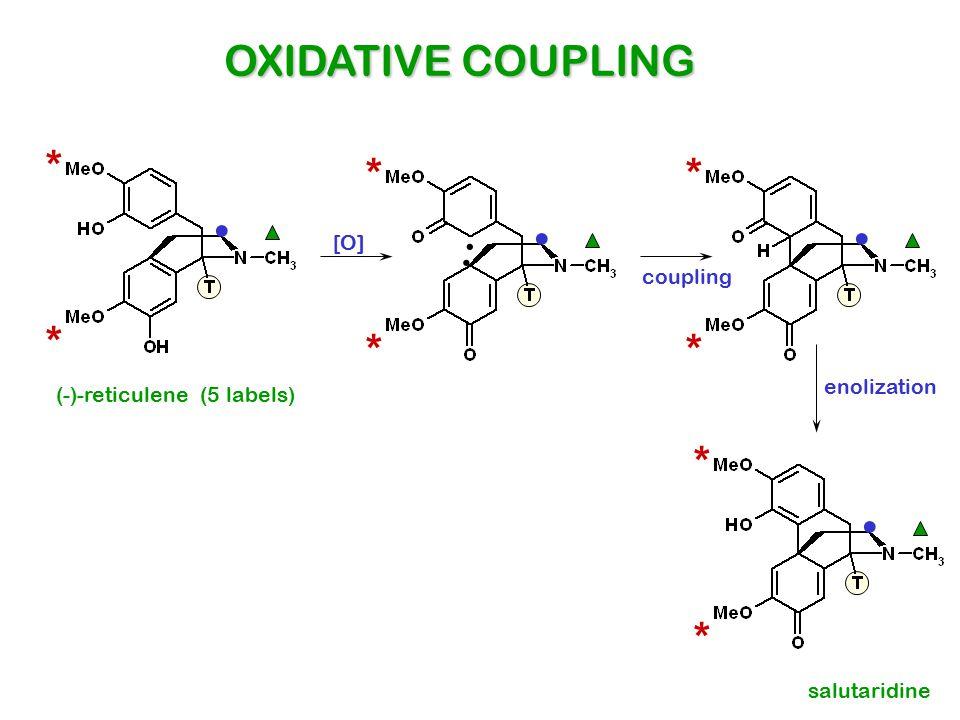 (-)-reticulene (5 labels) * *. * *... * *. coupling [O] salutaridine OXIDATIVE COUPLING * *. enolization