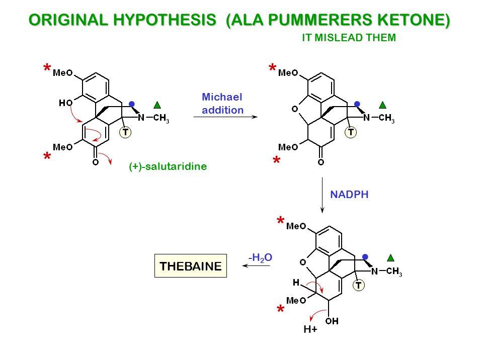 (+)-salutaridine ORIGINAL HYPOTHESIS (ALA PUMMERERS KETONE) * *. * *. Michael addition NADPH * *. H+ THEBAINE -H 2 O IT MISLEAD THEM