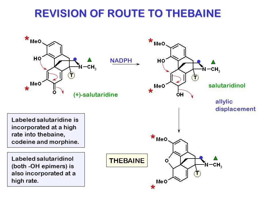 REVISION OF ROUTE TO THEBAINE * *. salutaridinol (+)-salutaridine * *. NADPH allylic displacement * *. THEBAINE Labeled salutaridine is incorporated a