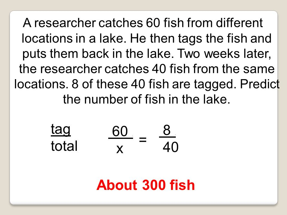 A researcher catches 60 fish from different locations in a lake.