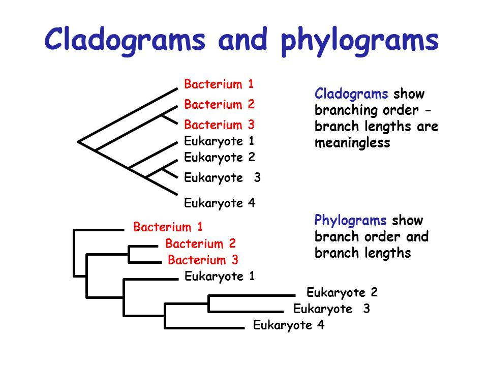 Bacterium 1 Bacterium 3 Bacterium 2 Eukaryote 1 Eukaryote 4 Eukaryote 3 Eukaryote 2 Bacterium 1 Bacterium 3 Bacterium 2 Eukaryote 1 Eukaryote 4 Eukary