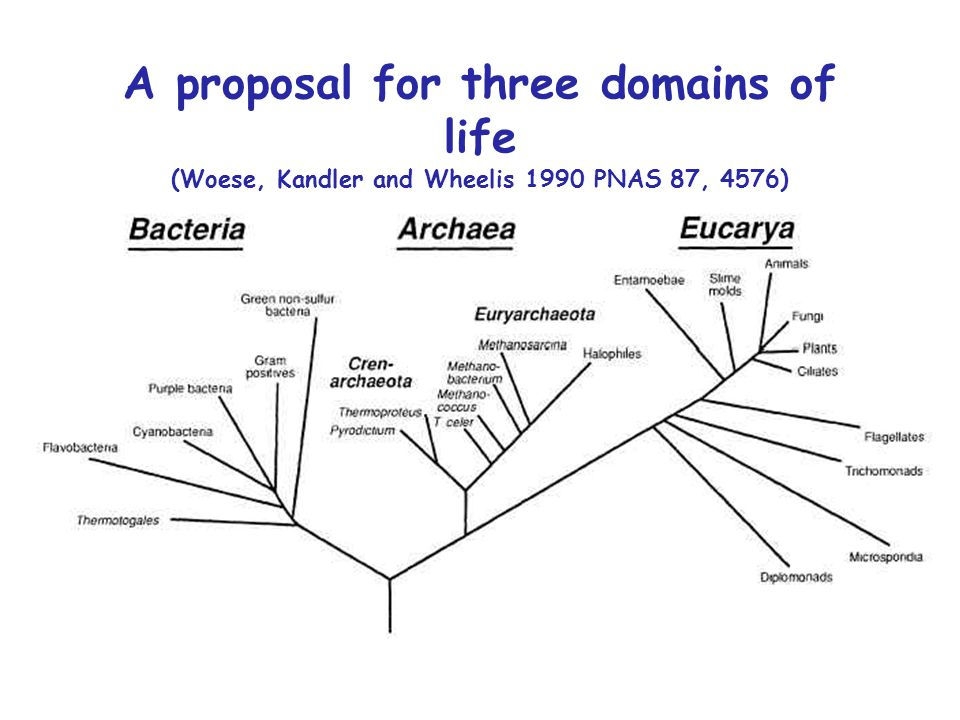 A proposal for three domains of life (Woese, Kandler and Wheelis 1990 PNAS 87, 4576)