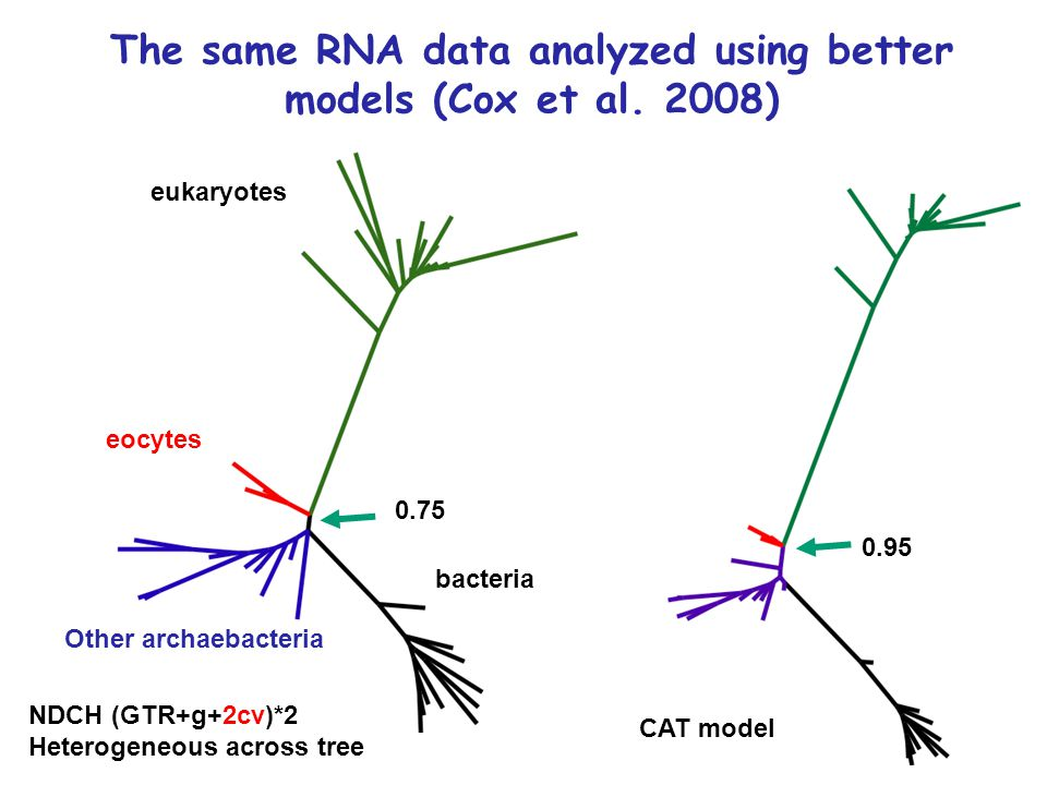 NDCH (GTR+g+2cv)*2 Heterogeneous across tree CAT model bacteria eukaryotes 0.75 0.95 Other archaebacteria eocytes The same RNA data analyzed using better models (Cox et al.